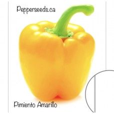 Pimiento Amarillo Pepper Seeds