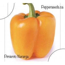Pimiento Naranja Pepper Seeds