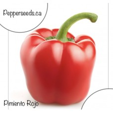 Pimiento Rojo Pepper Seeds